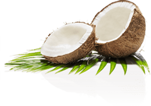 coconut hello